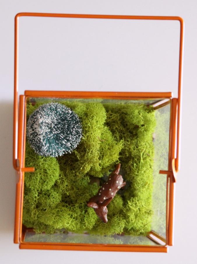 woodland-terrarium16